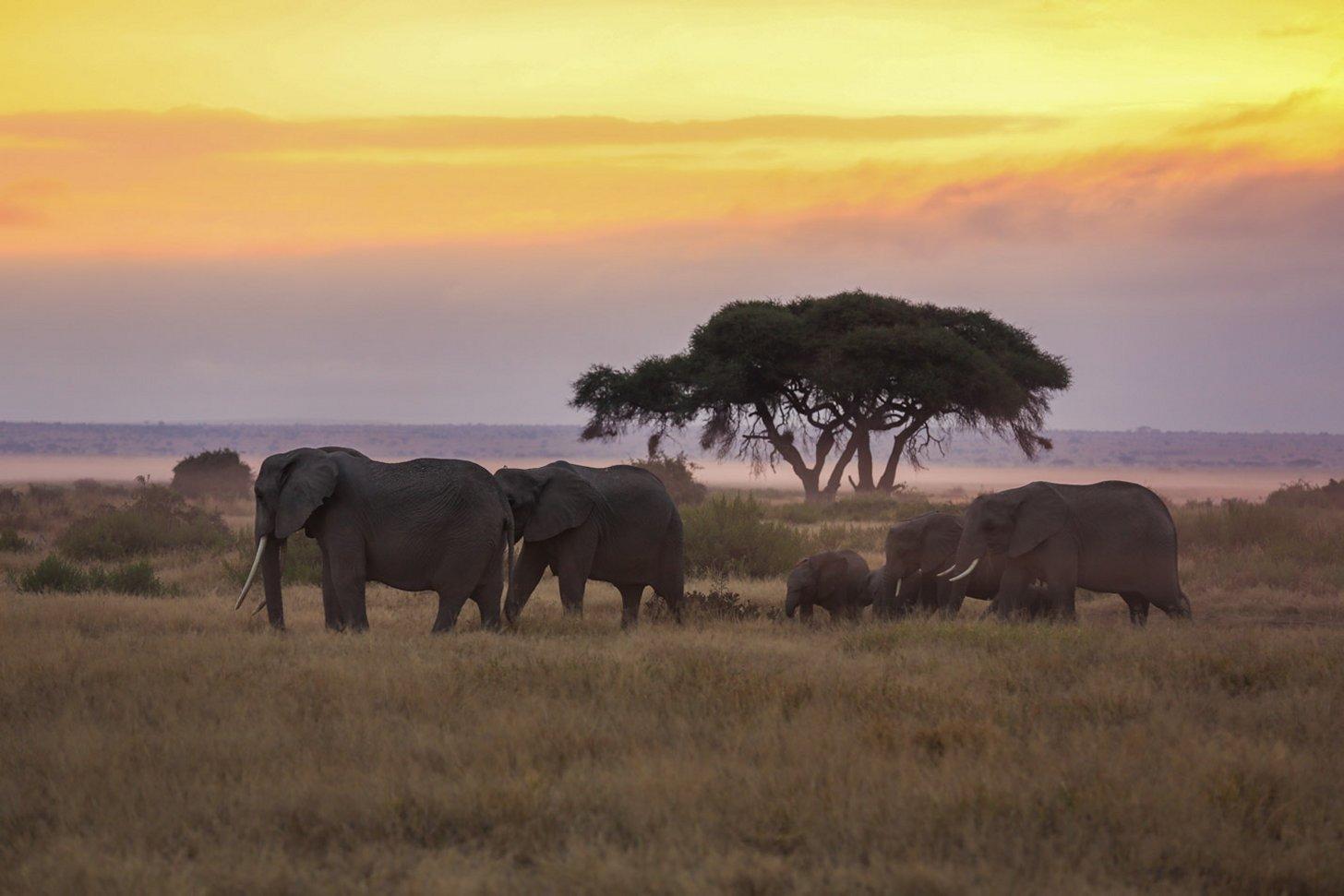 Amboseli National Park is vooral bekend vanwege de vele olifanten die hier leven.