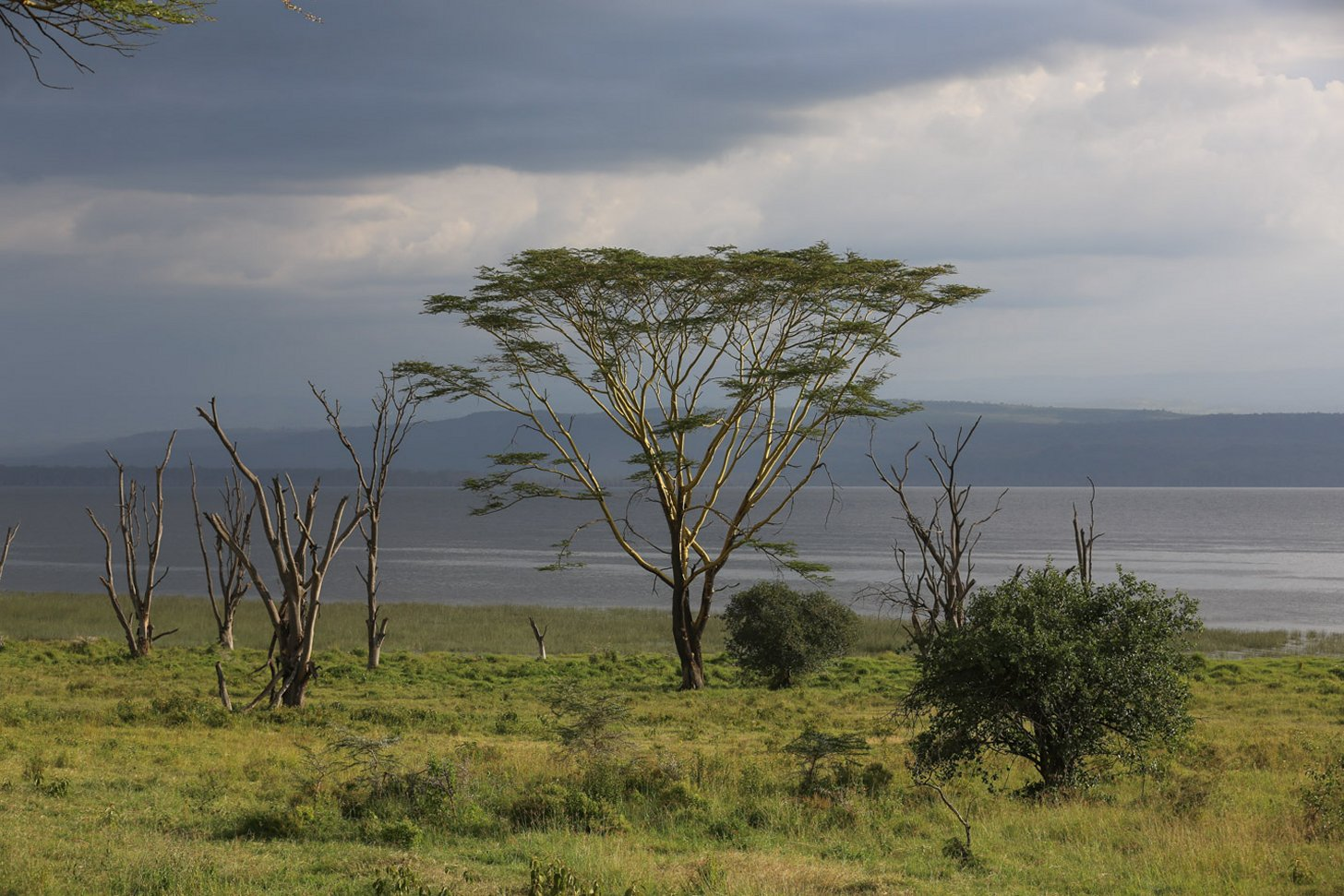 Lake Nakuru National Park is alleen al qua natuur de moeite waard.