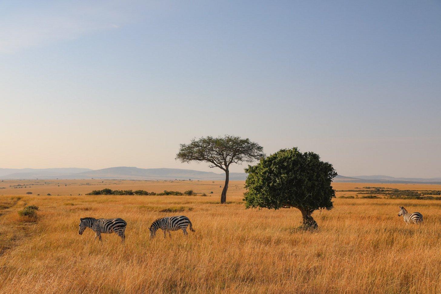 Het landschap van Masa Mara National Park